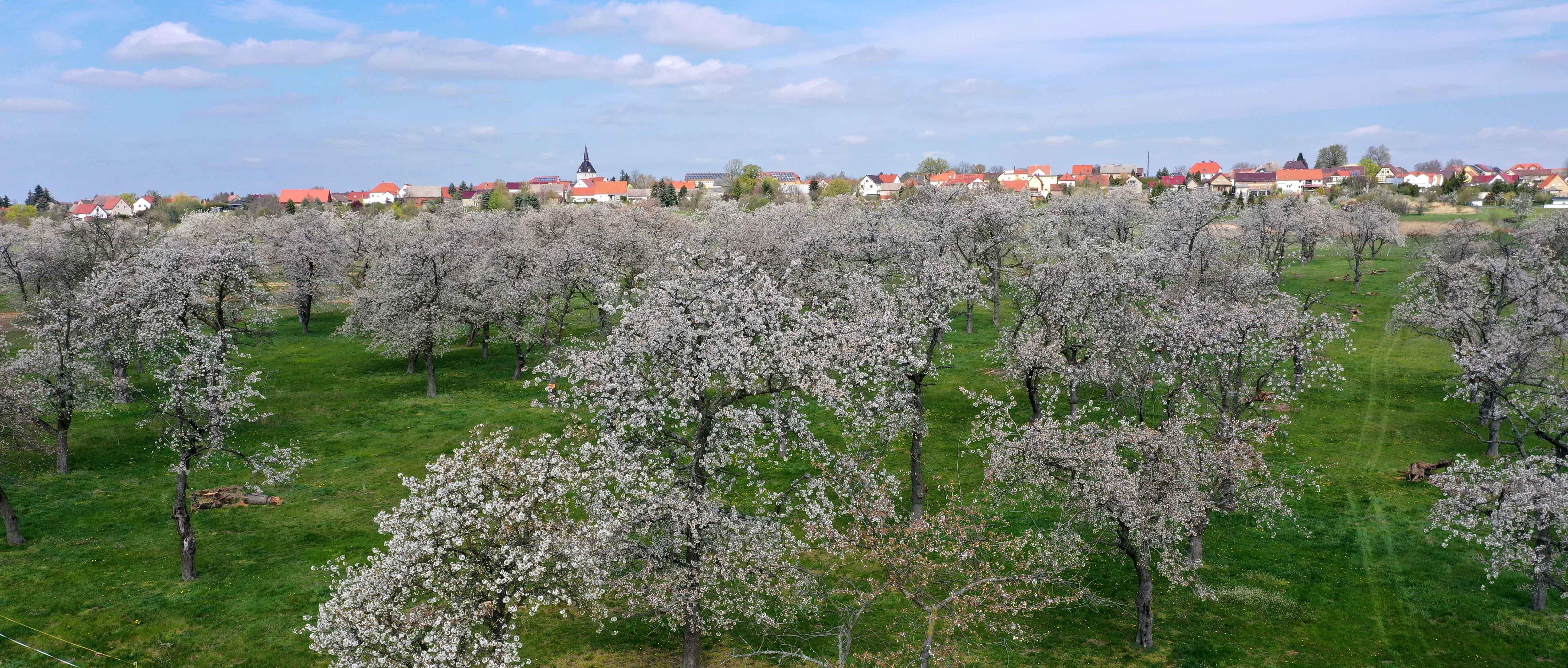Obstblüte Hohenleipisch