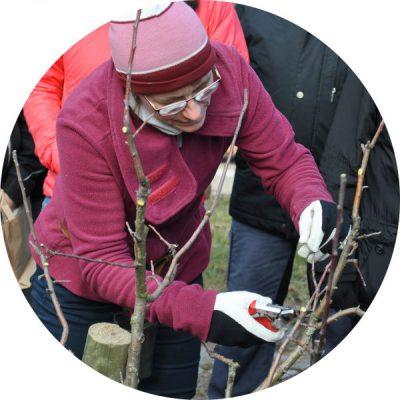 Obstbaumschnitt Urte Delft3