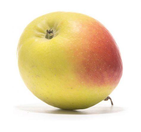 SP-Apfel-Bittenfleder-Sämling-(2)