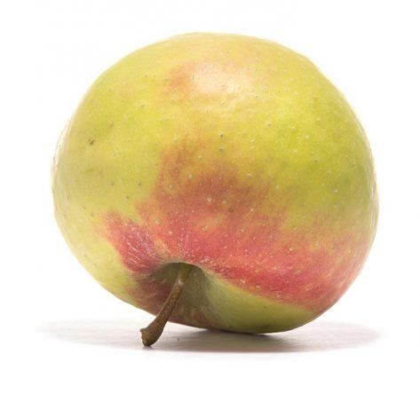 SP-Apfel-Bittenfleder-Sämling-(3)