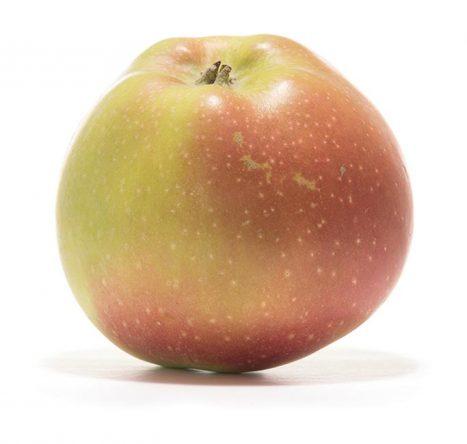 SP-Apfel-Boiken-(2)