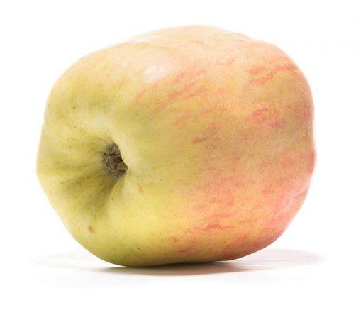 SP-Apfel-Finkenwerder-Prinzenapfel-(3)