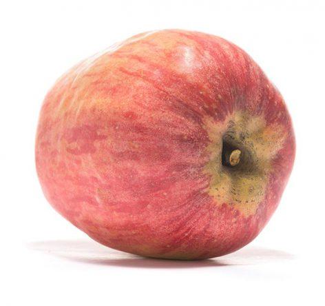 SP-Apfel-Finkenwerder-Prinzenapfel-(5)