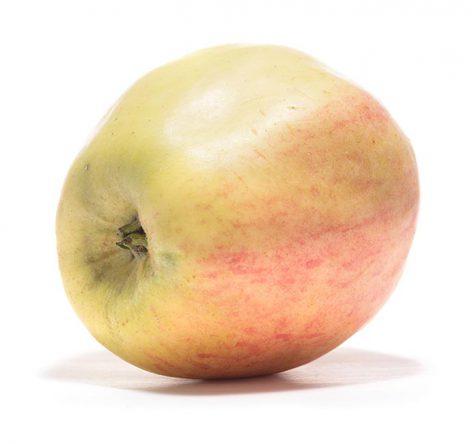 SP-Apfel-Finkenwerder-Prinzenapfel-(7)
