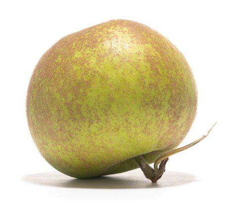 SP-Apfel-Graue-Herbstrenette-(2)