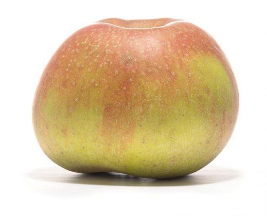 SP-Apfel-Orleans-Renette-(2)