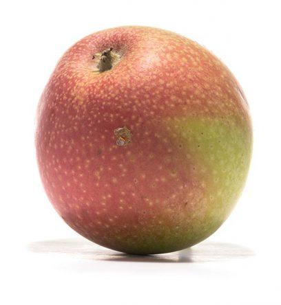 SP-Apfel-Rheinischer-Bohnapfel-(2)