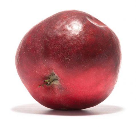 Roter Ausbacher
