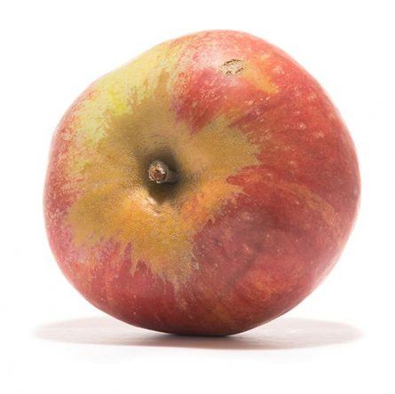 SP-Apfel-Roter-Gravensteiner-(2)