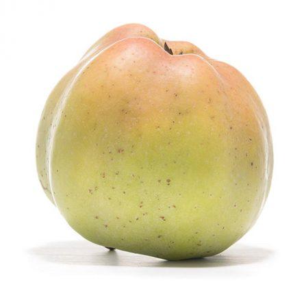 SP-Apfel-Weißer-Winterkalvill-(6)